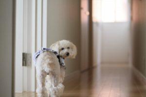 犬も歩けば棒にあたる
